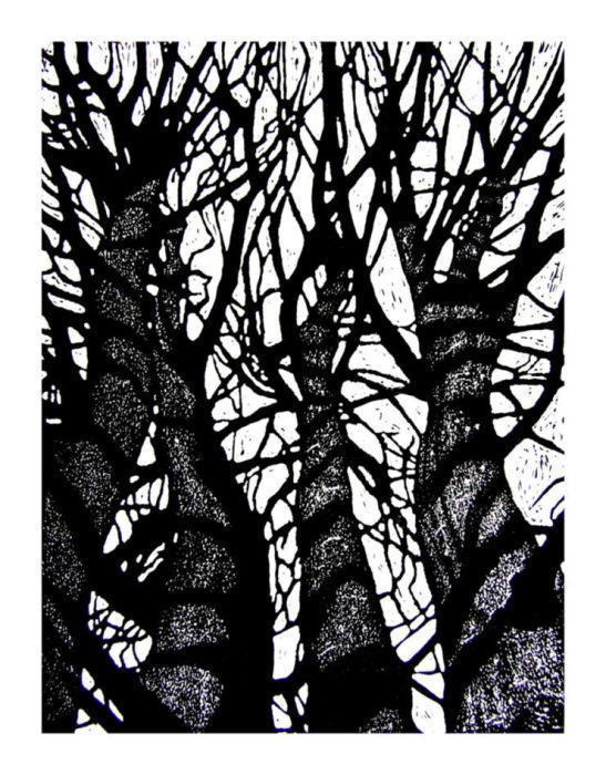 Shipley Trees 2 by Duncan Pass
