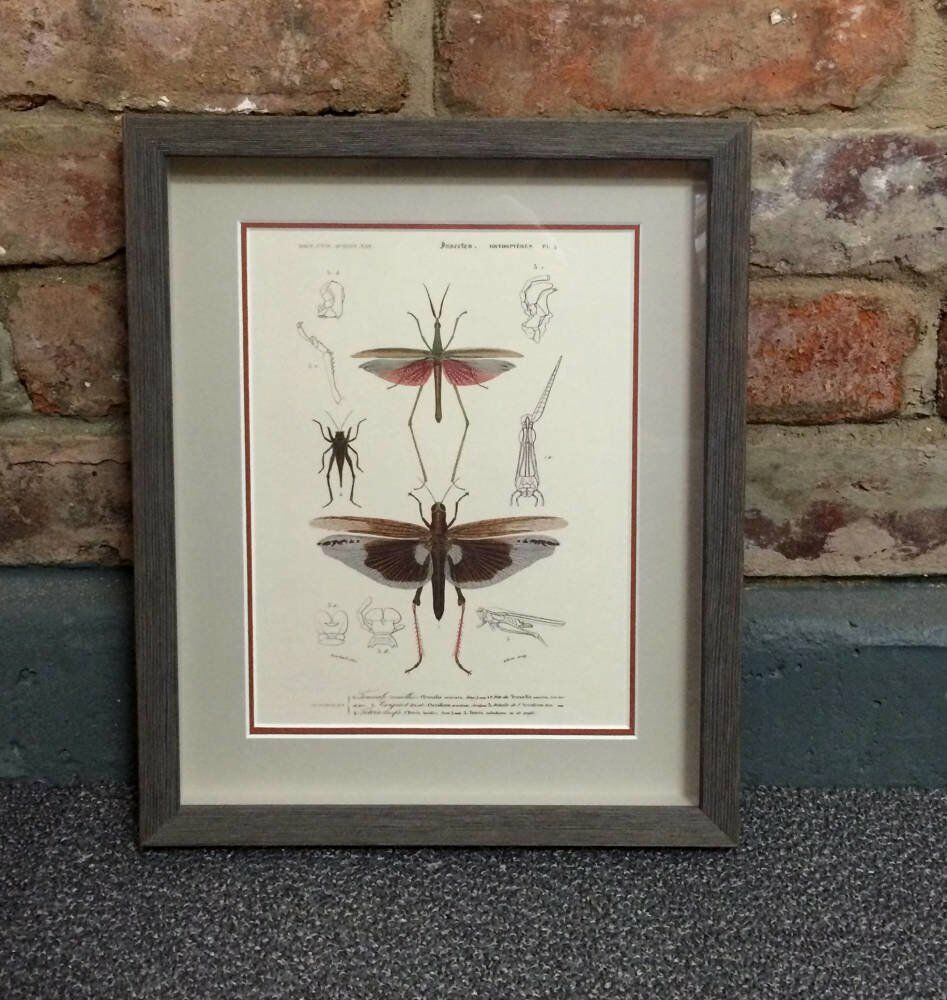 Framed antique framed antique prints triptych larson juhl lancaster - Antique insect sketches framed