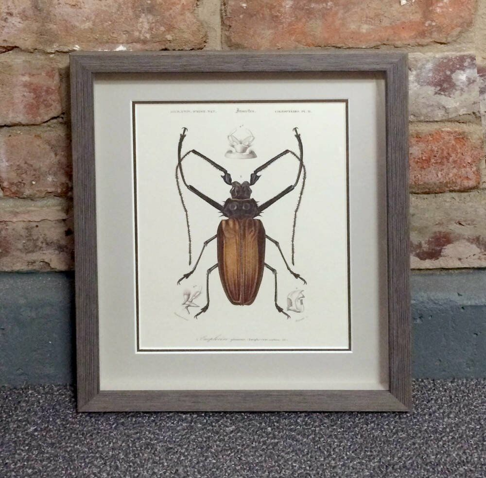 Antique insect sketches framed - bespoke spacer larson juhl larson juhl lancaster triptych